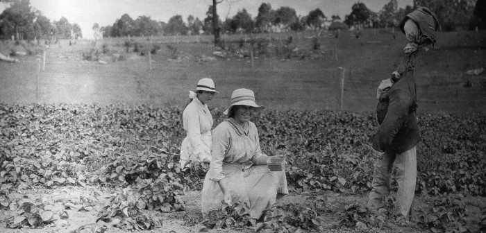 old photograph of women picking crops in a field