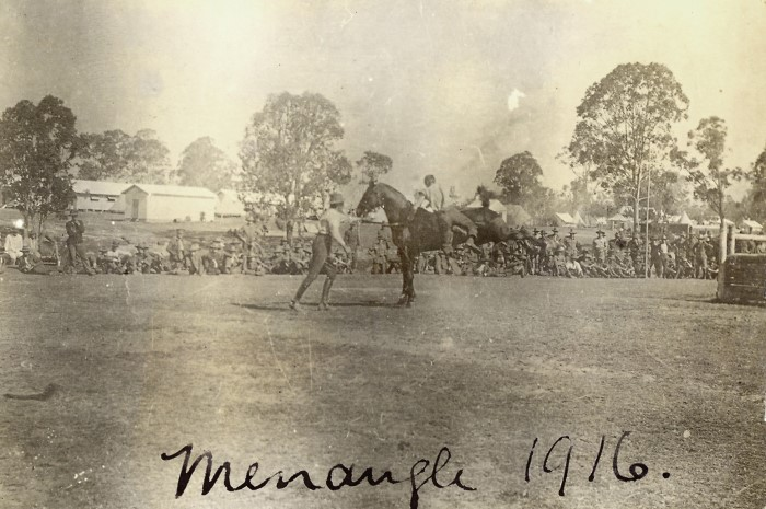 A man breaking in a horse at Menangle in 1916