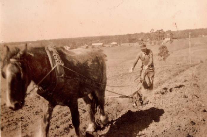 A man ploughing a field with a horse drawn plough