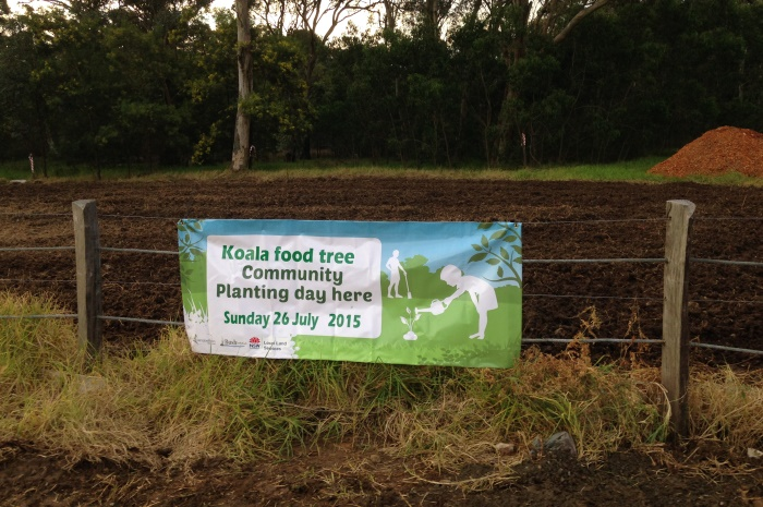 National Tree Day - Koala Food Tree Planting Day 2015