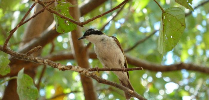 Michael Ellison _WT honeyeater.JPG