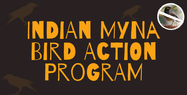 Indian Myna Bird Action Program