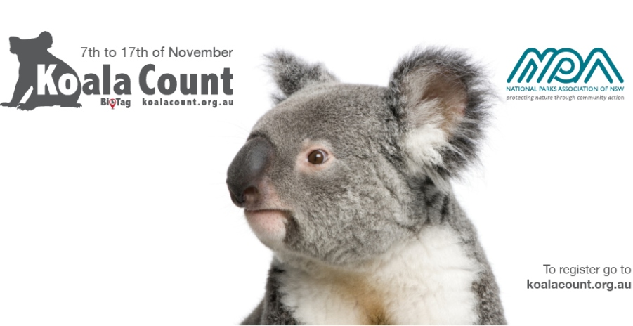 NPA logo for Koala Count