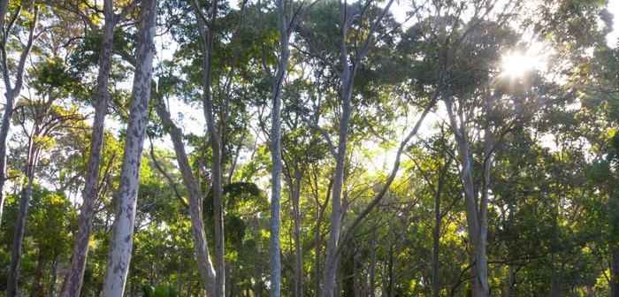 Trees with sunlight coming through the branches